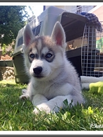 Max (2 mois)