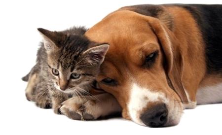Kutya, cica barátság