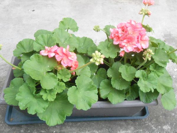 belles jardinières