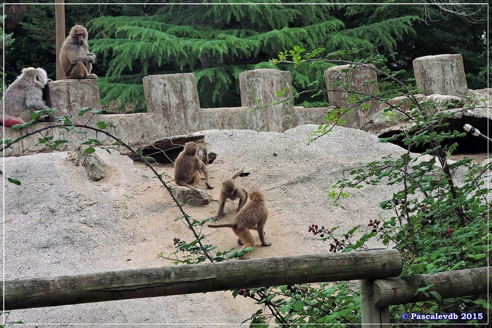 Zoo du Bassin d'Arcachon à La Teste - Août 2015 - 8/12