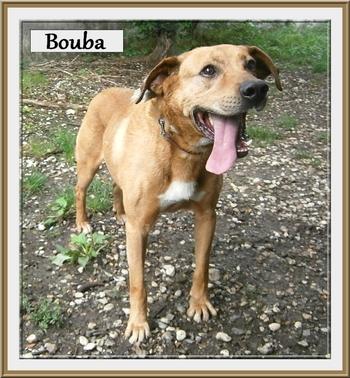 Bouba B 3