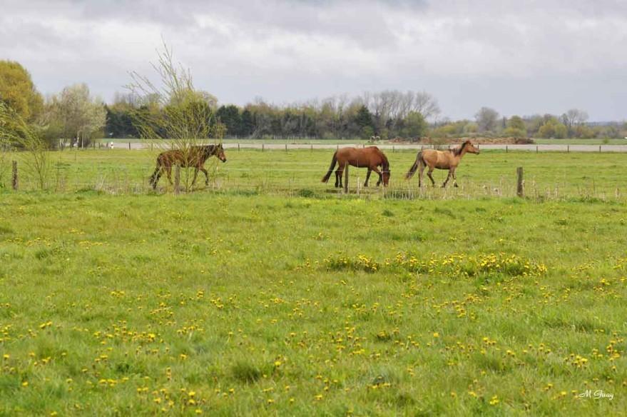 chevaux-henson-2168.jpg