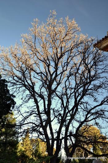 2015.03.26 Bormes les Mimosas, Domaine de Rayol (département du Var) 2