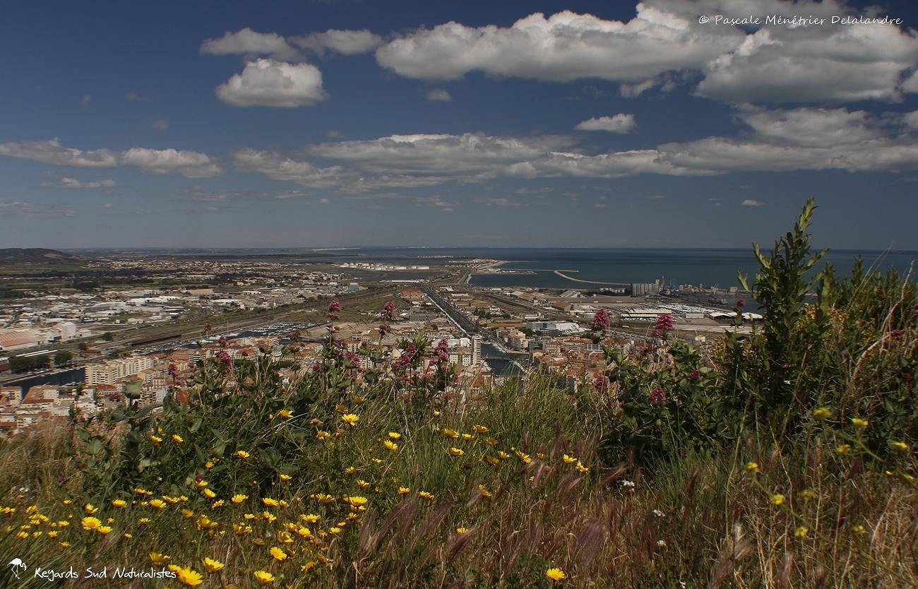 Sète... vu du haut du Mont Saint-Clair