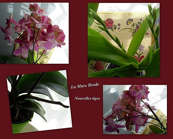 2012-05-17-orchidee-fillou-escabeau.jpg