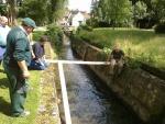 Sauvetage de bébés cygnes au Château Malou