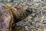 Découverte - Les tortues