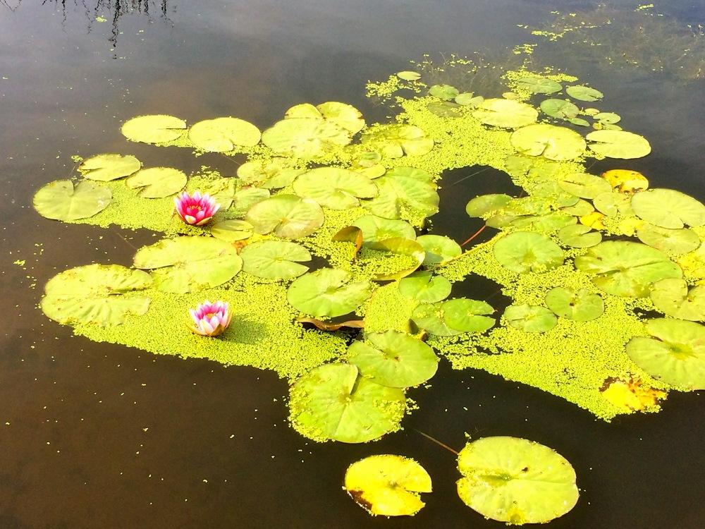 Agréable promenade au jardin botanique de La Ria ( Pornic )