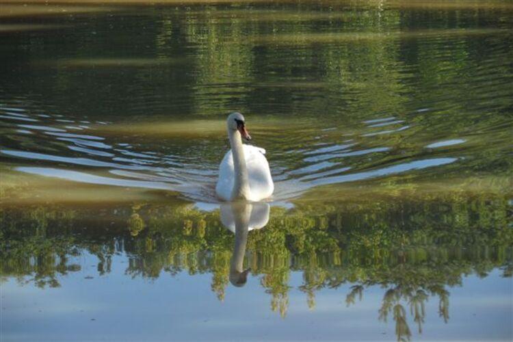 Nature matinale à Neuvy.