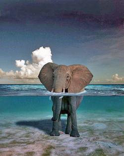 Toilette d'éléphant 3.