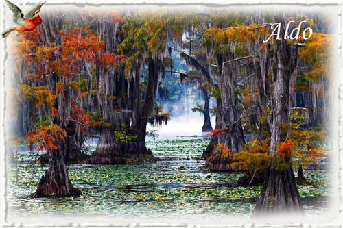 PPS Caddo Lake