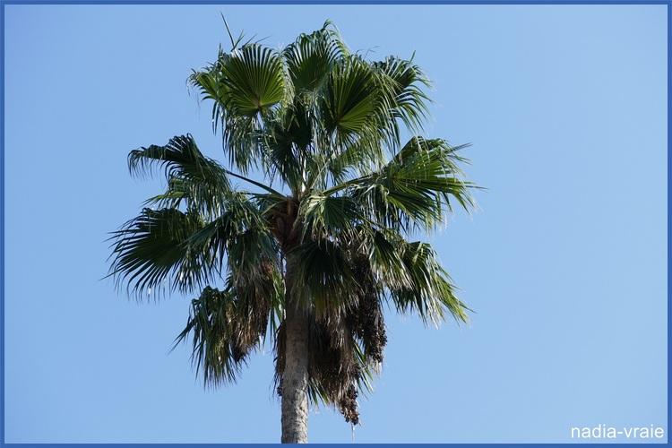 Suite de mon voyage après Barcelone, croisière dans la Méditerranée. (4)
