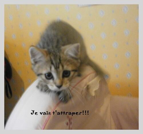 ♥photos de plume chaton!!!