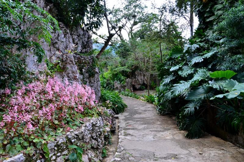 jardin des orchidées soroa cuba schnoebelen