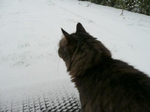 neige-chats_01.JPG