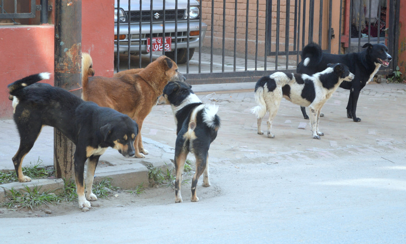 Une vie de chien......