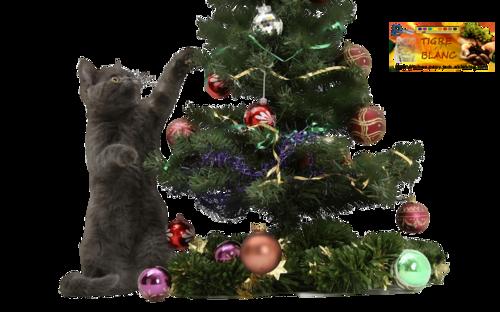 -- FETE -- Noël -- 6