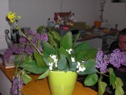 Tiens Maîtresse, des jolis fleurs.....
