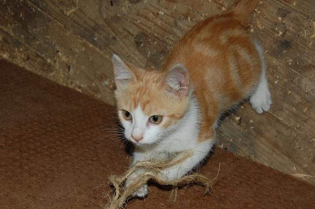 chaton20juilletc