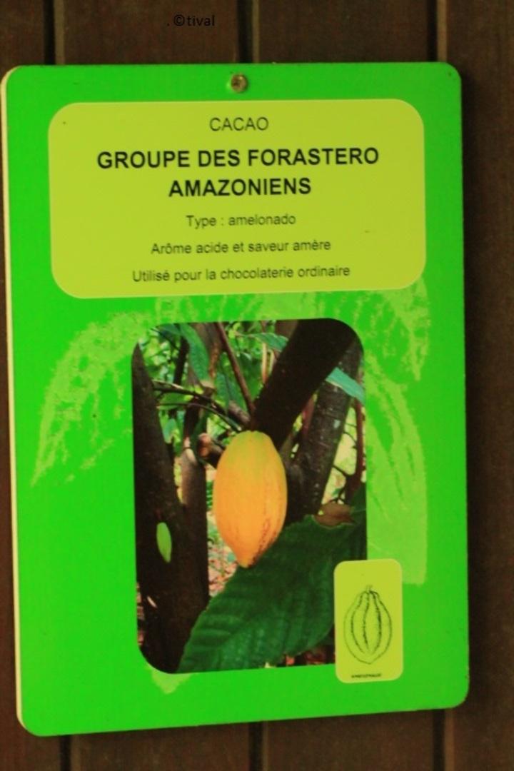 Musée du Cacao à Pointe-Noire