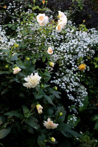 L'automne au jardin (4/4)