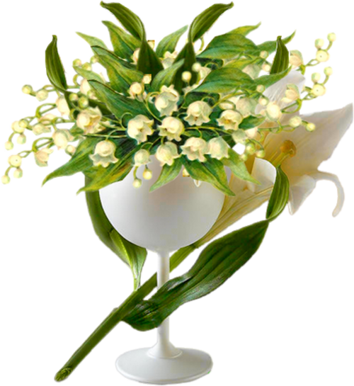 Cadeaux de mon amie magnolias