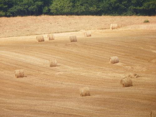 Le blé, symbole de bonheur
