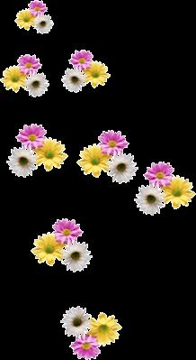Fleurs en Farandole Série 19