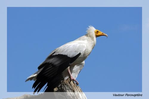 Gros oiseaux