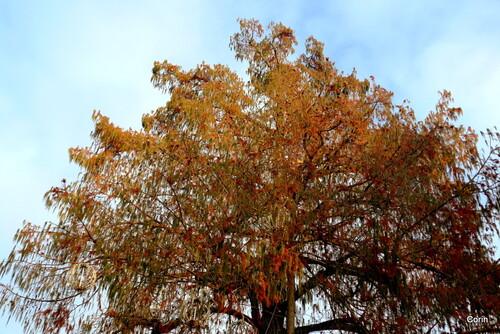 Le haut d'un arbre en janvier