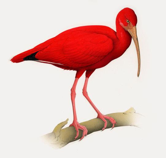 Tubes oiseaux d'eau