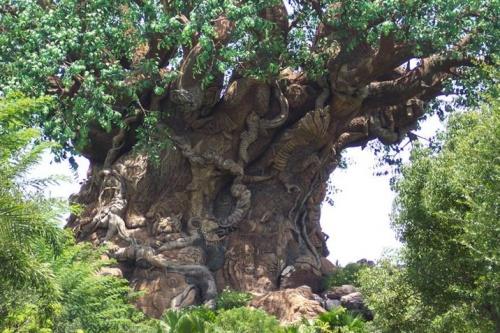 ♥ un arbre étonnant ♥