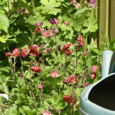Un bain de fleurs...