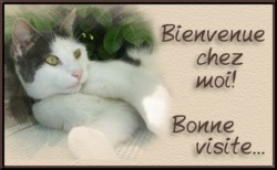 C  P  ANIMAUX  divers  16