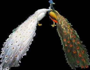 Papiers**Bordure oiseaux**