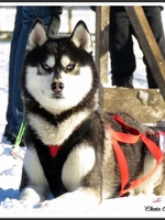 Maïko (20 mois)