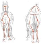 [TUTO] Apprendre à dessiner les chevaux