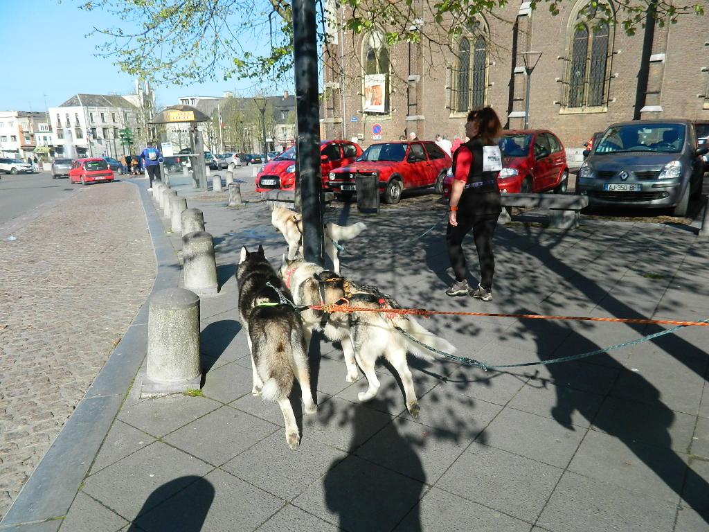 chiens des glaces