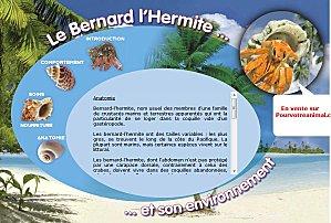 bernard-l-ermite.jpg