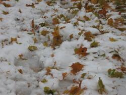 Feuilles d'hiver