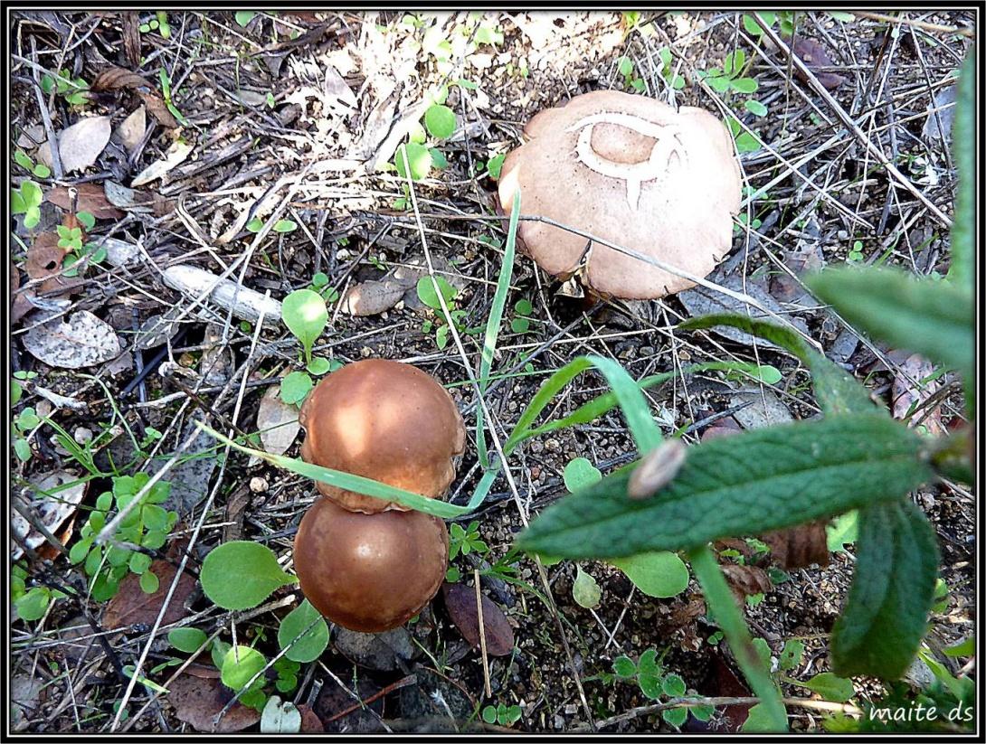 Epoque des champignons