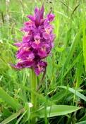 Zoé la petite orchidée