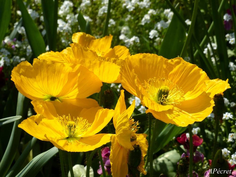 Faune et Flore au Jardin des Plantes