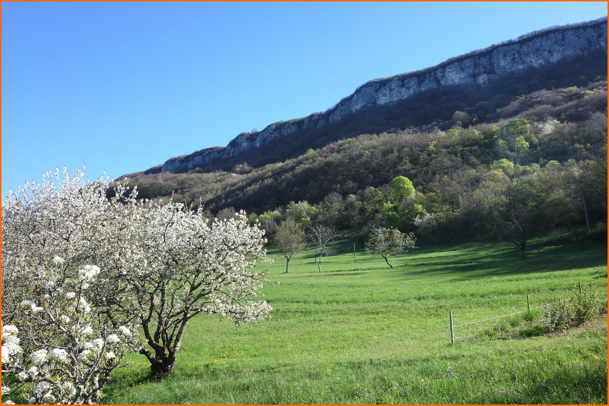 La falaise sommitale depuis les Granges-Dessous