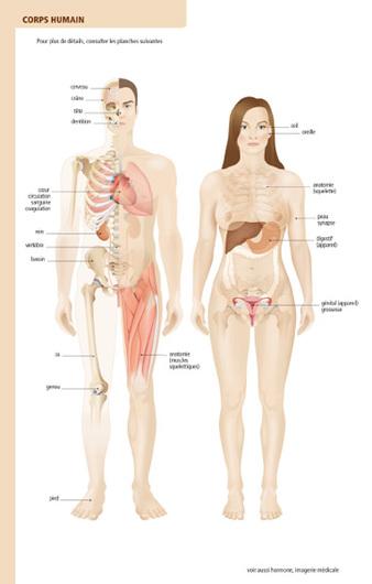"""Résultat de recherche d'images pour """"corps humain dictionnaire"""""""