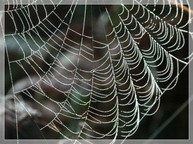 En fil de soie