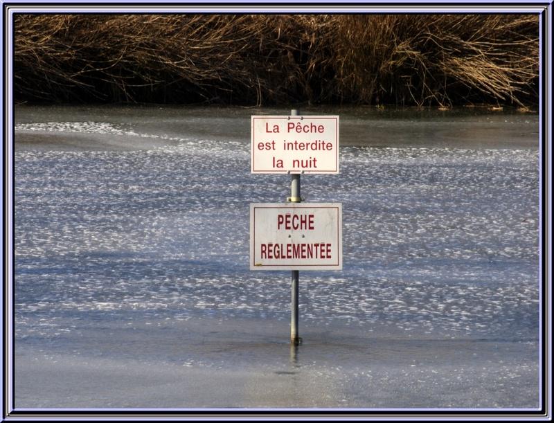 Dimanche 12 février 2012 ,petite balade à l'étang de St Georges de Didonne (17)