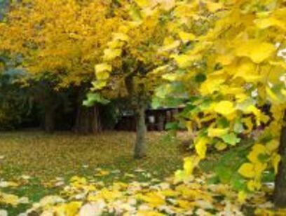 L'automne de nos vies