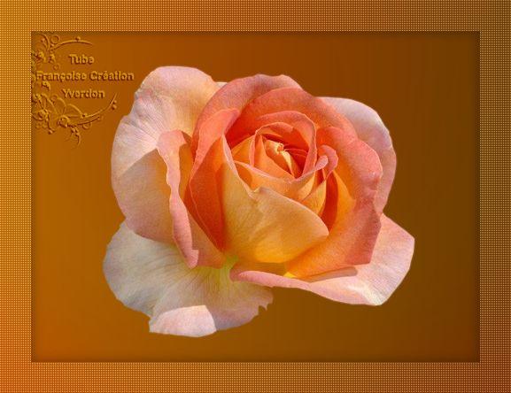 Roses (01 à 10)