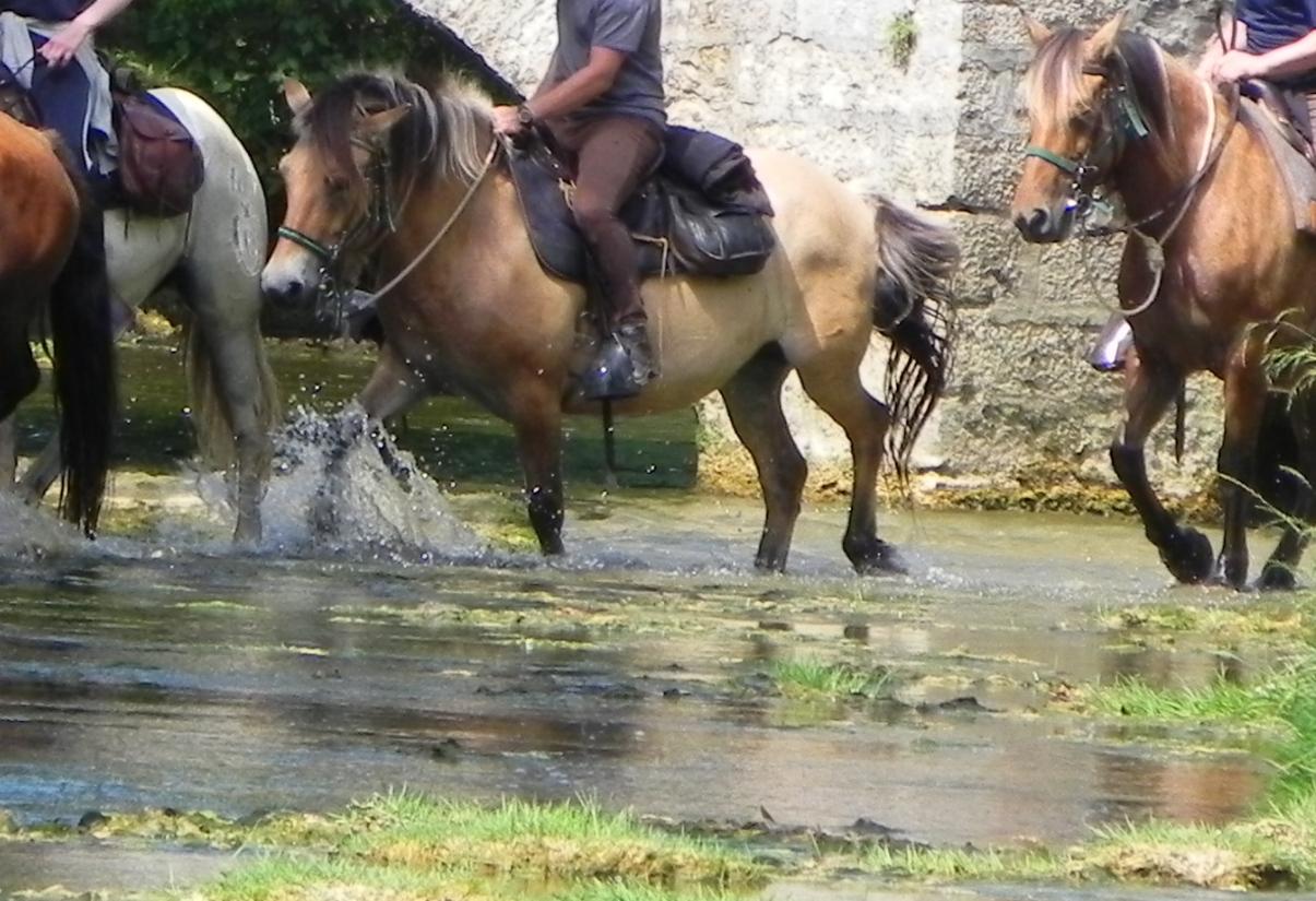 des cavaliers sur la rivière ...